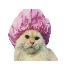 היגיינה ומוצרי טיפוח לחתול