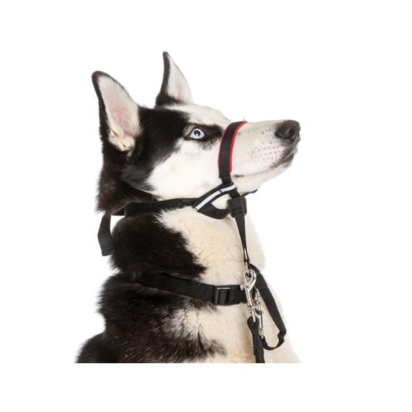 HALTI מחסום הלטי לכלב